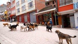 cachorros lago titicaca copacabana