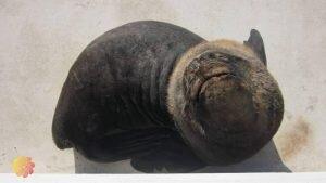 o que fazer em punta del este leão marinho