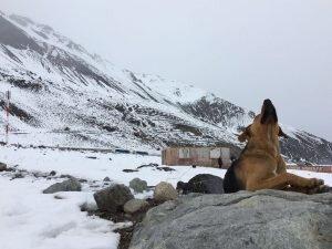 passeios em santiago cão neve