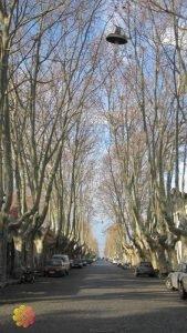 colonia do sacramento árvores