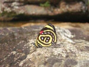 alto paraíso borboleta