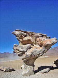 deserto de sal árvore de pedra