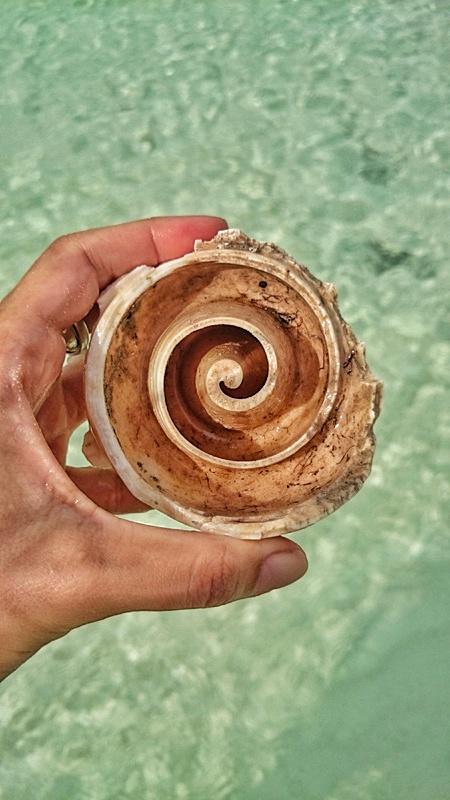 playa-del-carmen-concha