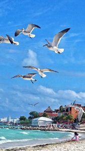 playa-del-carmen-passaro