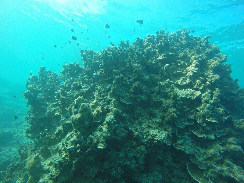 velejar na polinesia fundo do oceano