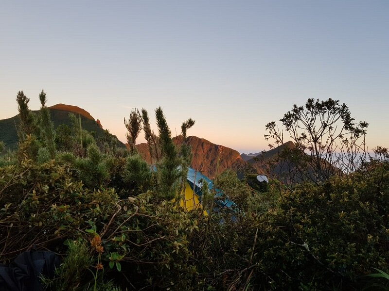 trekking do pico paraná plantas montanha
