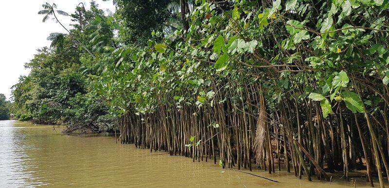 ilha do combu rio