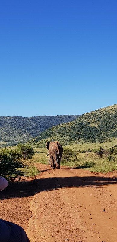 parque nacional de pilanesburg elefante