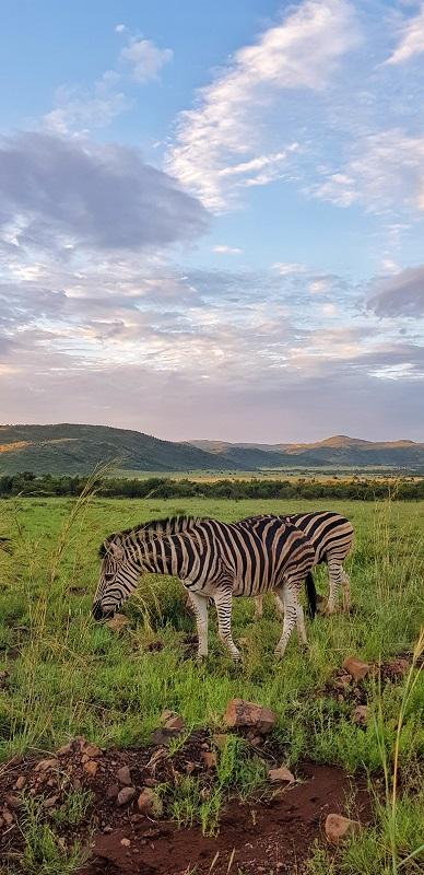 parque nacional de Pilanesberg animais
