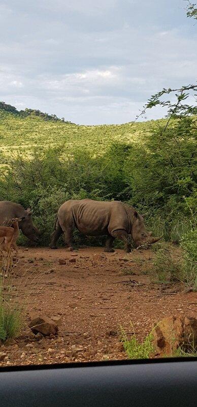 parque nacional de Pilanesberg big five