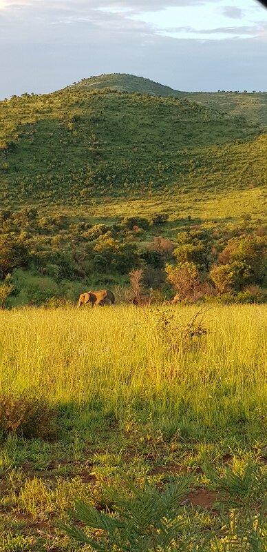 parque nacional de Pilanesberg como ahcar animal