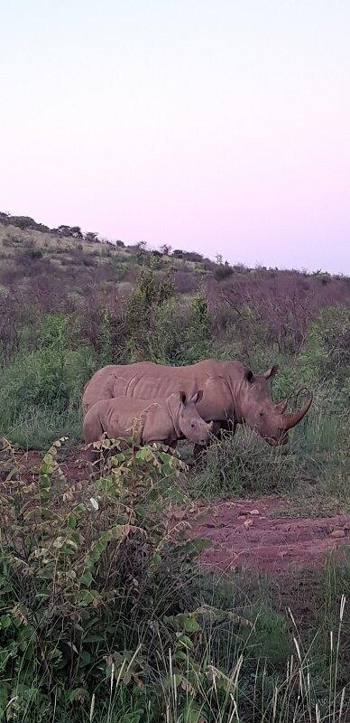 parque nacional de Pilanesberg ronoceronte
