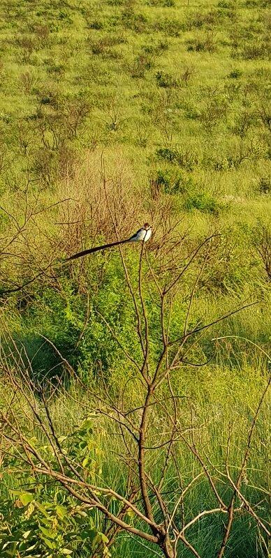 parque nacional de pilanesburg passaros