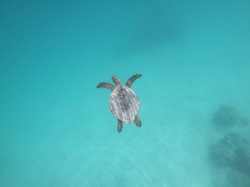 ilhas maldivas tartaruga