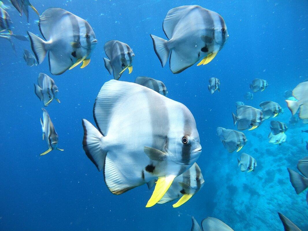 Dhangethi maldivas vida marinha