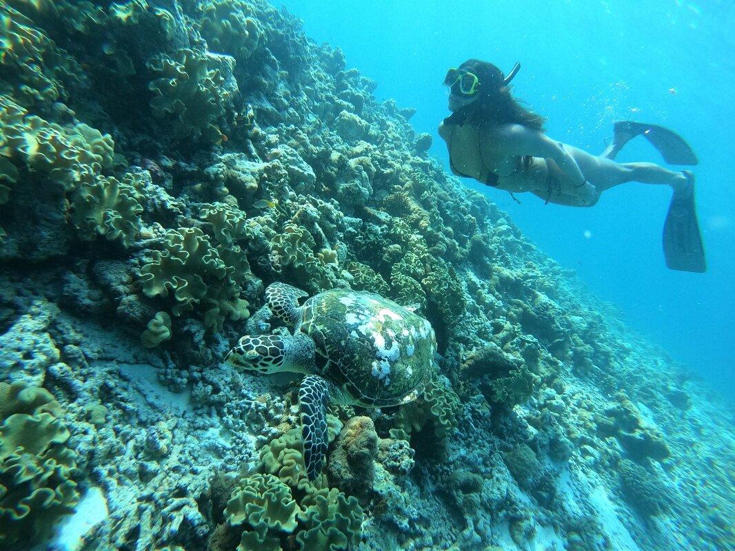maldivas tartaruga