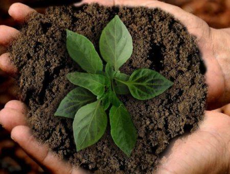 Dicas de sustentabilidade: Viaje dentro de casa e aprenda coisas novas!