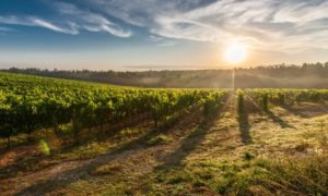 Enoturismo no Brasil: 7 destinos de vinho para sua degustação!