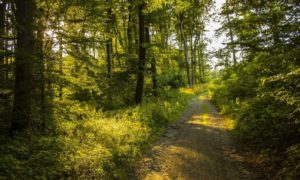 Como fazer necessidades fisiológicas em trilha: saiba mais aqui