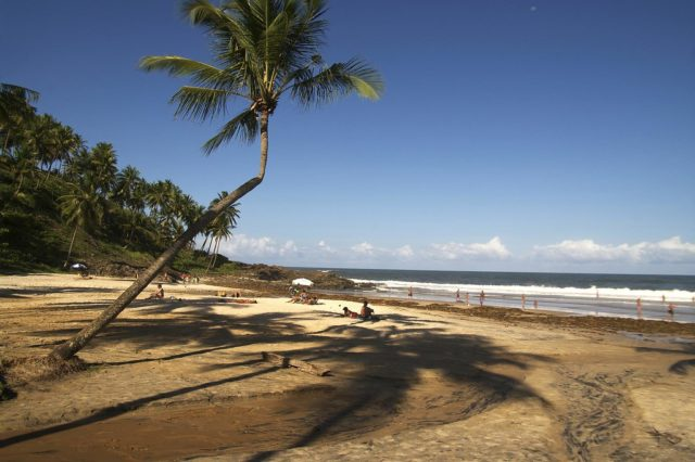 praias de itacaré bahia coqueiro areia amarela
